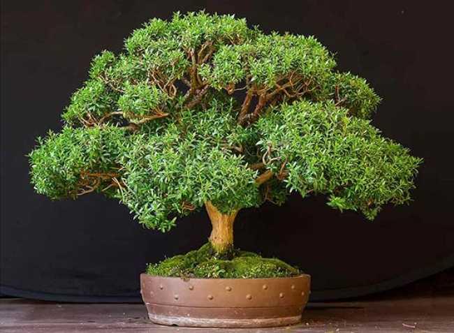 10 plante care creează un microclimat perfect acasă