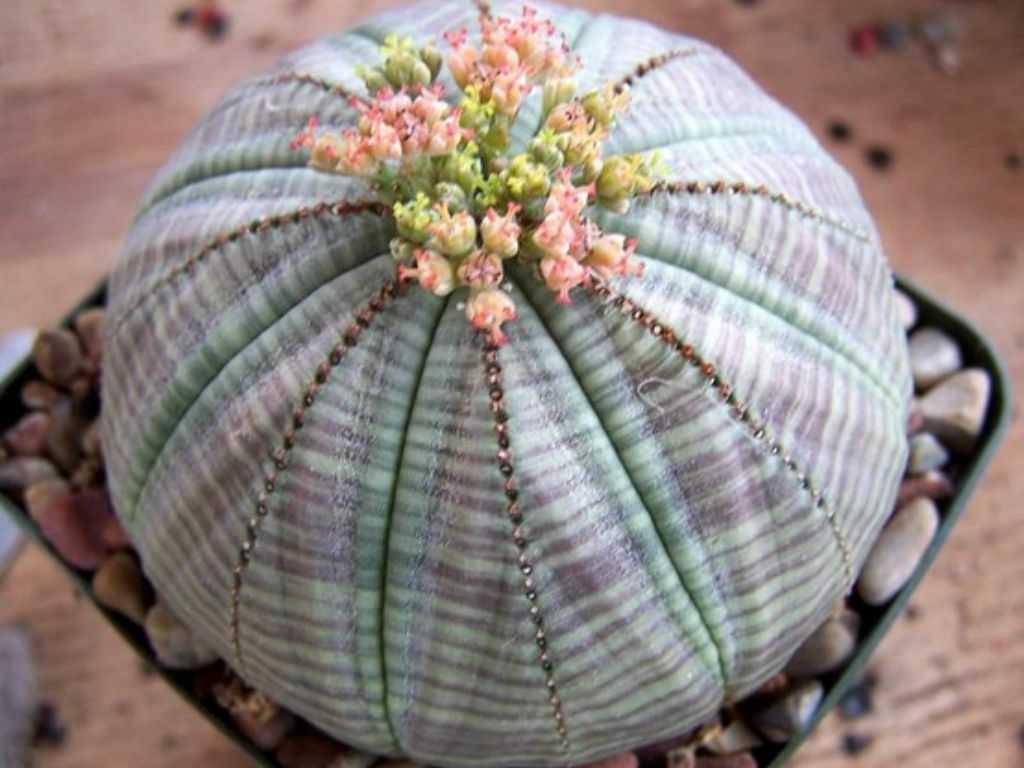 10 plante ciudate, dar frumoase despre care nu știai că există