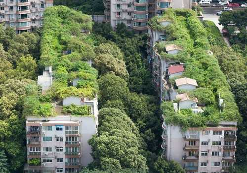 vegetatie-natura-în-oraș