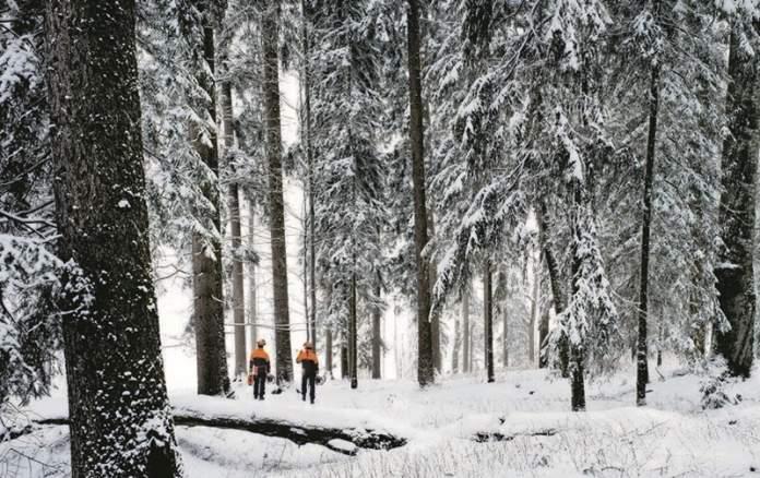 Stihl_motoferăstrău_iarna