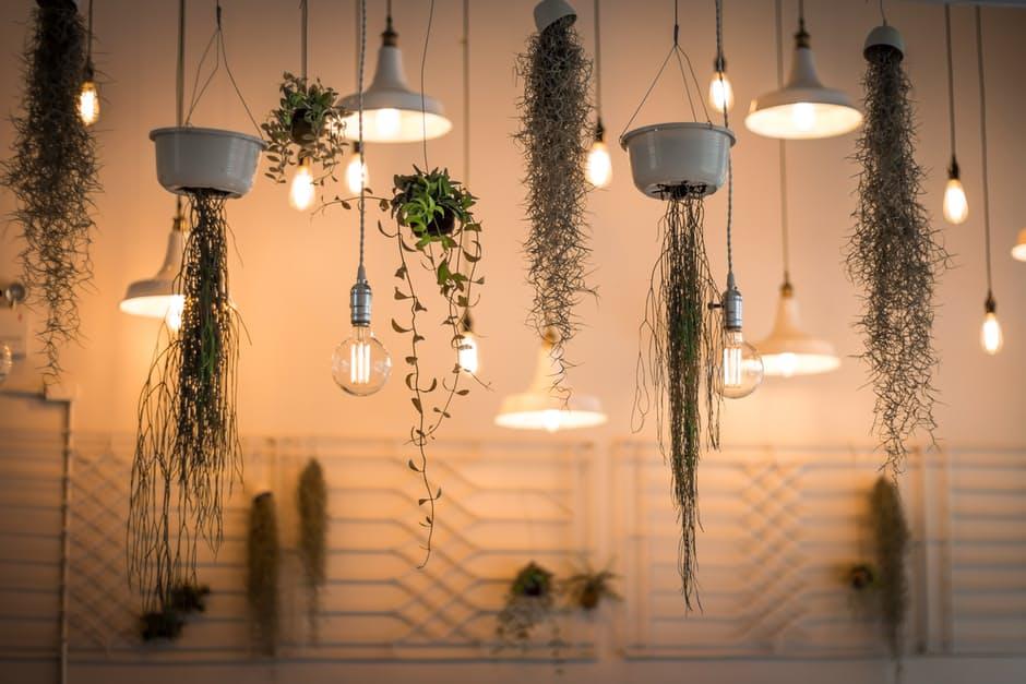 10 trucuri să ajuţi plantele să treacă cu bine peste sezonul rece
