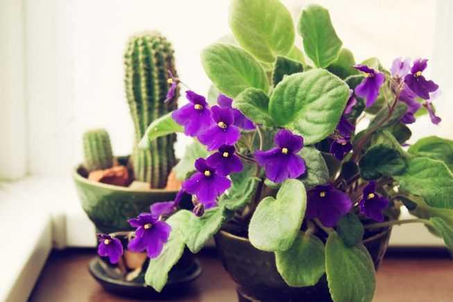Şapte flori pe care trebuie să le ai în casă de Paști