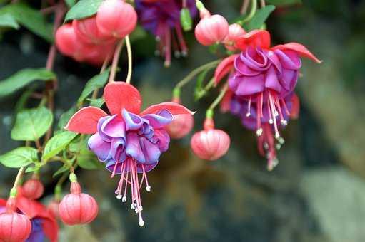 Cele mai bune plante pentru ghivecele suspendate