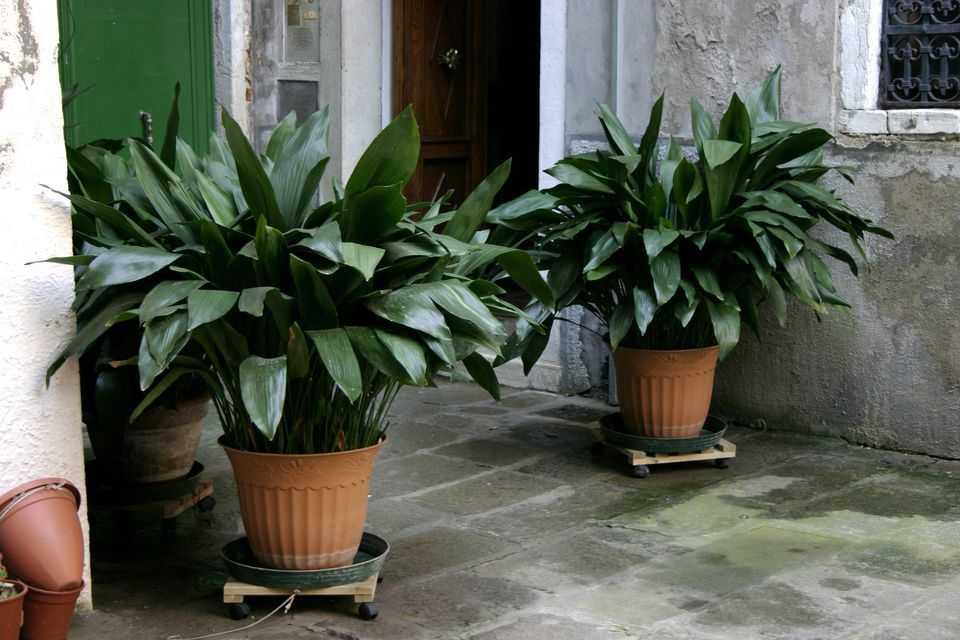 Planta de apartament care se întreține cel mai ușor
