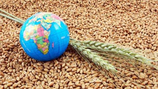 prețuri-cereale-agrogo-grâu