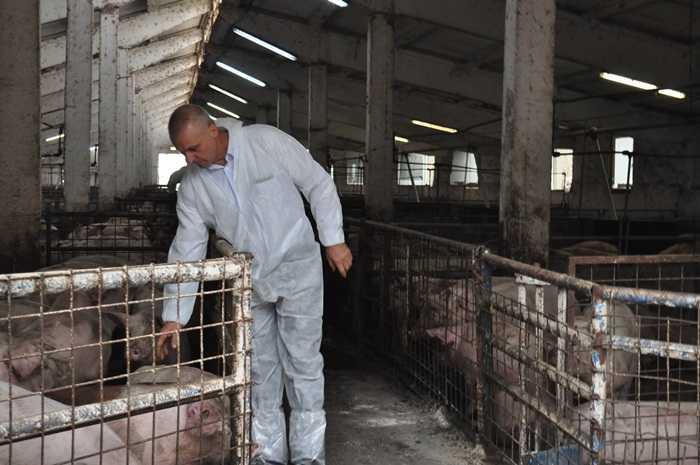 Maricel-Lazăr-firma-Pig-Elit