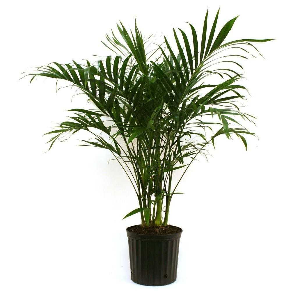 Plante care rezistă în cele mai întunecoase locuri din casă