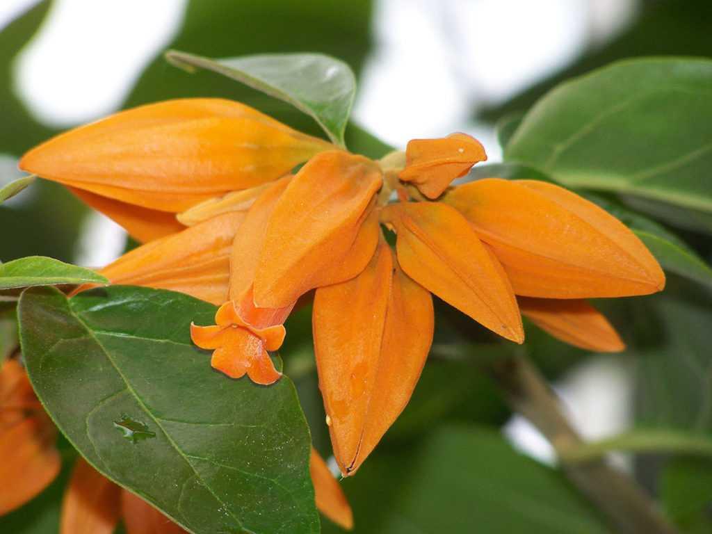 Cele mai superbe şi neobişnuite flori pentru grădina ta