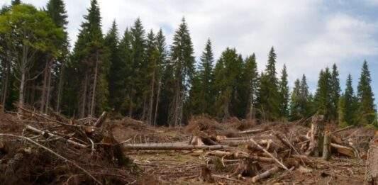 păduri defrișări