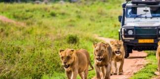 excursii africa safari